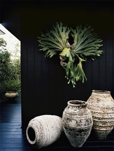 Staghorn fern on black. -- I want a staghorn fern! Potted Plants, Indoor Plants, Art Vert, Unique Garden, Olive Jar, Black Walls, Green Garden, Ferns, Garden Inspiration