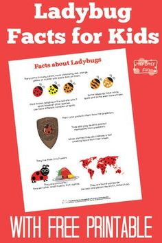 Fun Ladybug Facts for Kids With Free Printables
