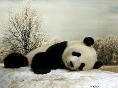 Teddy bear panda had a hard day! Niedlicher Panda, Panda Love, Cute Panda, Panda Bears, Happy Panda, Polar Bears, Cute Funny Animals, Zoo Animals, Large Animals