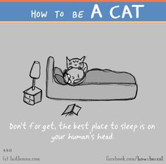 Don't forget, the best place to sleep is on your human's head.