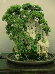 Love bonsai. . . .this one is very unusual....I think it is plants growing on some kind of porous structure (?)