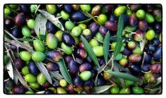 olives/wedding colors: green, purple, yellow & brown