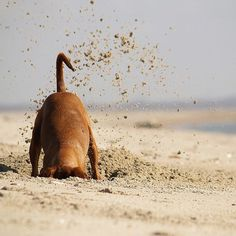 Dogs and Dirt