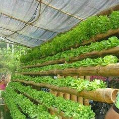 Hydroponic gardening or hydroponics is the science of growing plants using only nutrient-rich liquid as a soil replacement. Learn about hydroponics here. Home Hydroponics, Hydroponic Farming, Hydroponic Growing, Hydroponics System, Growing Plants, Growing Bamboo, Aquaponics Plants, Hydroponic Lettuce, Aquaponics Supplies