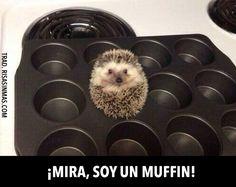 ¡Mira, soy un muffin!