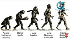 Human Evolution, Explain Why, Definitions, Biology, This Or That Questions, Education, Memes, Movie Posters, Stage