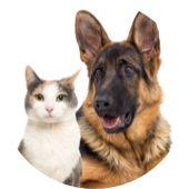 K9 Adventures Featuring K9 Advantix® II Rocky Mountain Spotted Fever, Itchy Rash, Tick Bite, Flea Treatment, Flea And Tick, Dog Park, Pet Health, Large Dogs, Fleas