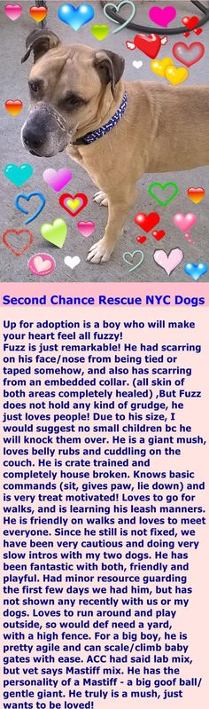 You can apply right here for Fuzz!! http://nycsecondchancerescue.org/app-form/