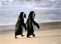 Baby penguins on the beach - cute!
