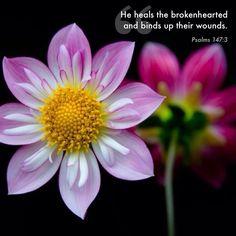 Psalms 147:3.  He heals the broken-hearted...