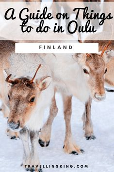 A Guide on Things to do in Oulu Packing List For Travel, Travel Guide, Stuff To Do, Things To Do, Pet Travel, Finland, Travel Destinations, Pets, Travelling