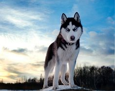 Top 10 Strongest Dog Breeds in the World  #dogs #strongbreeds http://gazettereview.com/2016/12/top-10-strongest-dog-breeds-world/