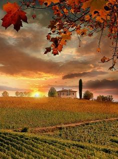 Feast of colour… Tuscany's autumn landscapes, Italy
