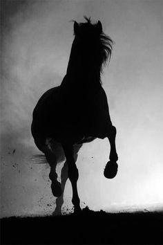 silhouette d'un cheval