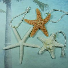 18 Naturally Colorful Seashell and Starfish Ornaments  by ShellScapes on Etsy