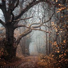 Was ist vor zehn Jahren mit Jill im Wald passiert? Lüftet ihr Geheimnis auf Meinem Blog ---> http://kateslittlesweetthings.blogspot.de/p/nur-ein-einziges-wort-von-dir.html  Fanfiktion.de ---> http://www.fanfiktion.de/s/55b3e4a200020273315ef210/1/Nur-ein-einziges-Wort-von-dir- Wattpad ---> https://www.wattpad.com/story/45624768-nur-ein-einziges-wort-von-dir #buch #nureineinzigeswortvondir #thriller #mystery #geheimnis #jugendbuch