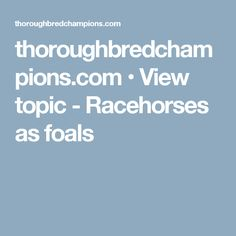 thoroughbredchampions.com • View topic - Racehorses as foals