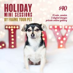 I'm doing some extra special 15 minute Holiday mini sessions on December 4th in HEALTHY SPOT Santa Monica from 11am - 3pm at 1110 Wilshire Blvd 90401.   Limited Spots Available!! Book your spots today by calling HEALTHY SPOT (310) 458-2004.  Share this with a friend, this would be a perfect gift!   #healthyspot #xmas #christmas #gift #puppy #minisessions #photography