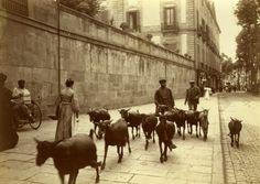 Barcelona (1907-1998), Frederic Ballell: Rambla de los Estudios. Rebaño de cabras frente al Palau Moja.