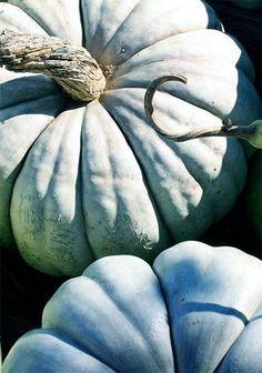 pumpkins   in hues of blue