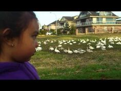 Look At All Those Chickens - #funny #cute