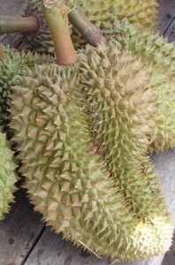 Durian Fruit Love it!