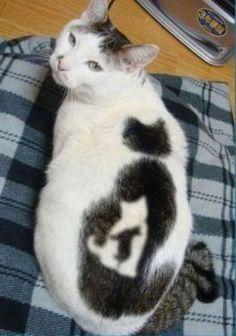 a cat.. on a cat..on a cat....on a cat