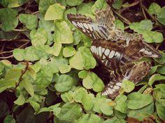 2 Schmetterlinge im Grünen