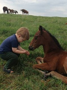 Little boy trying to feed foal. Precious moment horse bonding.