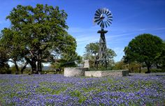 A Day in the Country Country Girls, Country Living, Wooden Windmill, Wind Machine, Wind Mills, In Memory Of Dad, Texas Bluebonnets, Blue Bonnets, Old Barns