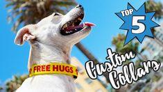 Best 5 Custom Pet Collars (Personalized Dog Collars)