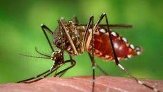 EUA encontram vírus Zika em tecido de bebês mortos no Brasil com microcefalia