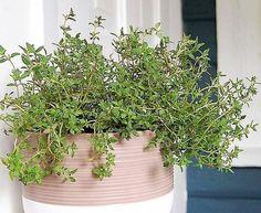 Garden Boxes, Herb Garden, Home And Garden, Herb Seeds, Garden Seeds, Container Plants, Container Gardening, Thyme Herb, Lavender Seeds