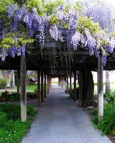 Add some trailing #vines to your outdoor arbors to add some beauty, shade and privacy.  This Wisteria vine is a beautiful option and it's an easy outdoor project - via @Home Depot