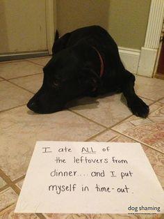 Dog Shaming - what's for dinner?