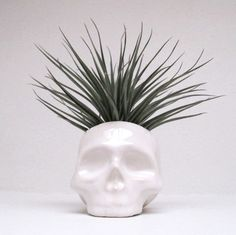 Ceramic Skull Planter  perfect for cactus succulent or by mudpuppy, $42.00