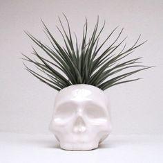 Ceramic Skull Planter  perfect for cactus succulent or by mudpuppy, $42.00