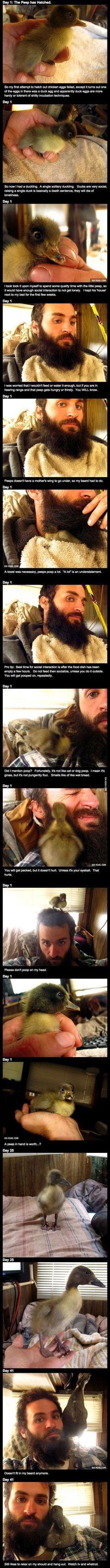 How This Man's Epic Beard Saved A Duckling's Life Is Brilliantly Beautiful. A Must See.  Well, when I was a kid I used to raise chicken and ducks like these. Minus the beared.
