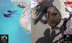 תיעוד של אריות ים משיטים ילדים בפארק מים בבלגיה פורסם בפייסבוק בשבוע שעבר ועורר ביקורת נוקבת. Lions, Fish, Sea, Animals, Lion, Animales, Animaux, Pisces, The Ocean