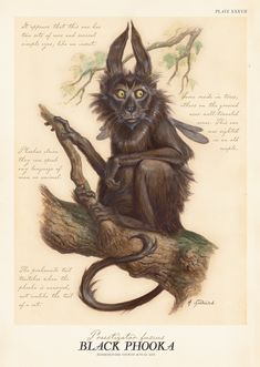 "Black Phooka from ""Arthur Spiderwick's Field Guide to the Fantastical World Around You"" illustration by Tony DiTerlizzi."