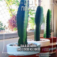 É nesse sábado!!! Vamos vender cactos e suculentas incríveis em um delicioso evento ao ar livre. Esperamos você: Av. São Luís 282 República a partir das 12h30  #oitominhocas #suculentas #cactus #decoracao #plantinhas #maisverde #feirinha #openair #vemprocentro