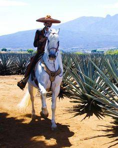 Charro en Tequila, Jalisco, Mexico