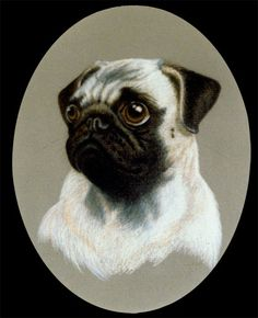 pencil drawings of pugs | Pug, Prismacolor Pencil on Matte Board