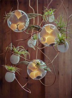 Got a bunch of tiny vases and some old hangers you don't need? Planter chandelier. You can find the air plants at your local hardware store.