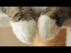 【意外と器用な猫の手】揉んだり洗ったり色々できるんです♪