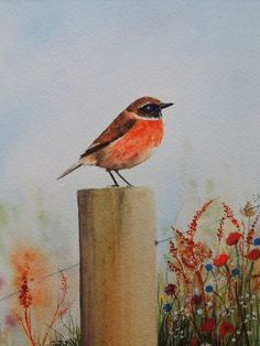 """Stonechat bird and wild flowers,original watercolour painting, mounted for 8x10"""" #Realism"""