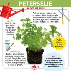 Herb Garden, Vegetable Garden, Home And Garden, Outdoor Plants, Indoor Outdoor, Kitchen Herbs, Gardening, Growing Herbs, Parsley