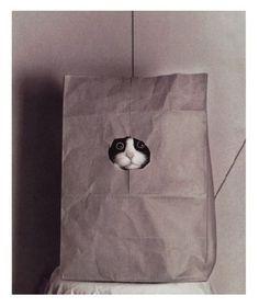 紙袋 cat 穴
