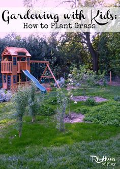 Great tips for removing Bermuda grass & preparing soil to plant grass from seed!