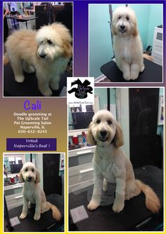 66 best grooming images on pinterest dog grooming styles dog welcome to the upscale tail the best award winning certified pet grooming salon in naperville il with over 50 years combined experience in the industry solutioingenieria Image collections